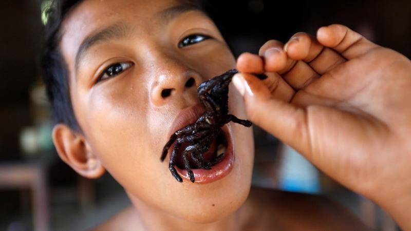 INSIGHT: Edible tarantula season is in full swing in Cambodia