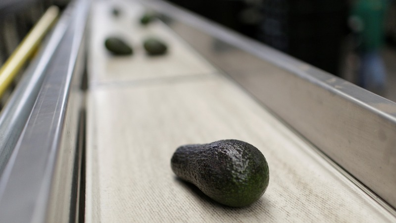 Lasers etch high-tech labels into fruit