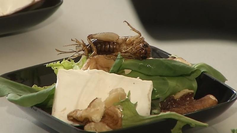 Chocolate mealworm cake and cricket salad, anyone?