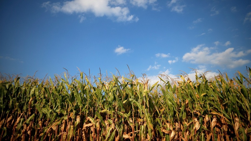 U.S. farm lobby flexes muscle on NAFTA