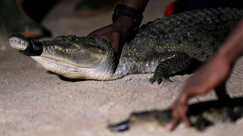 Abidjan: where crocodiles and construction collide