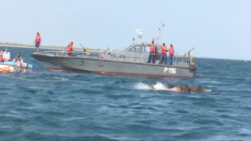 INSIGHT: Two wild elephants rescued at sea