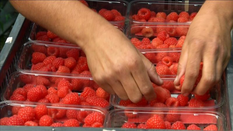 British summer fruit: a rarity post-Brexit?
