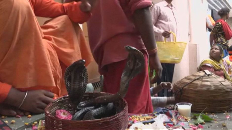 INSIGHT: Hindus celebrate snake festival in India