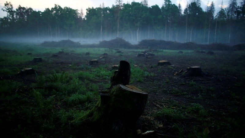 Poland ignores court order on logging ancient forest