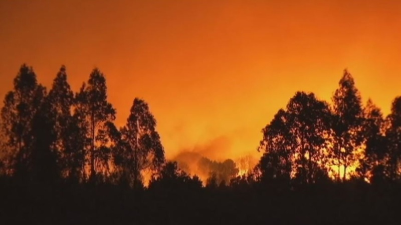 INSIGHT: Forest fires rage through northern Spain