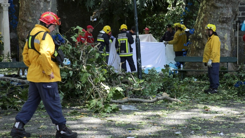 Falling tree kills 12 at Portuguese religious festival