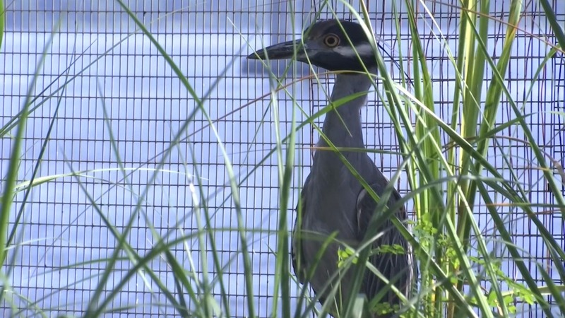 South Carolina aquarium preps its animals for solar eclipse