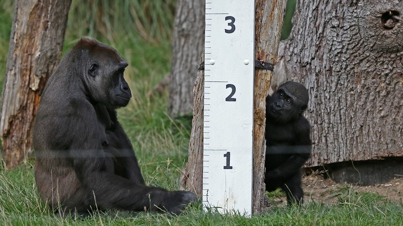 INSIGHT: London Zoo begins weigh-in