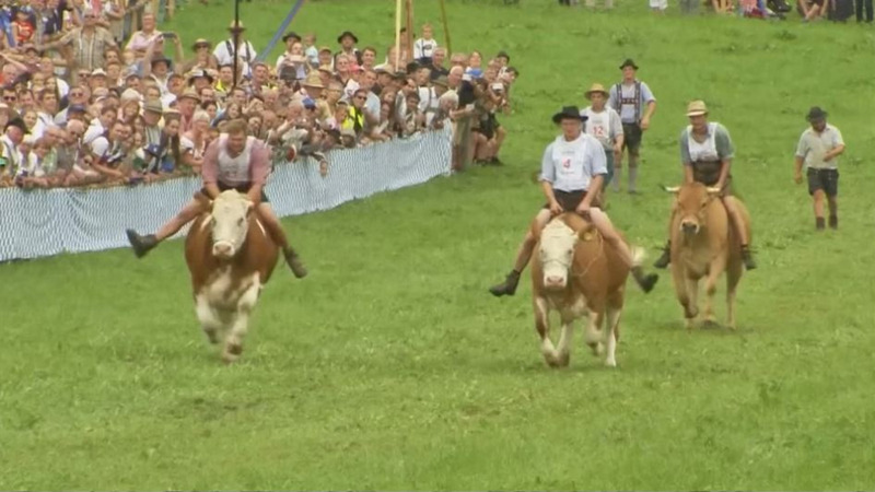 INSIGHT: Livestock and lederhosen at Bavaria's ox races