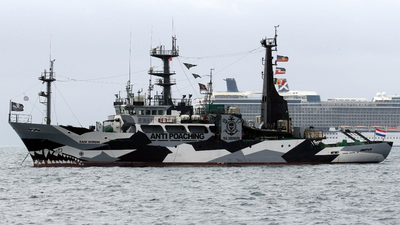 Sea Shepherd suspends hunt for Japanese whalers