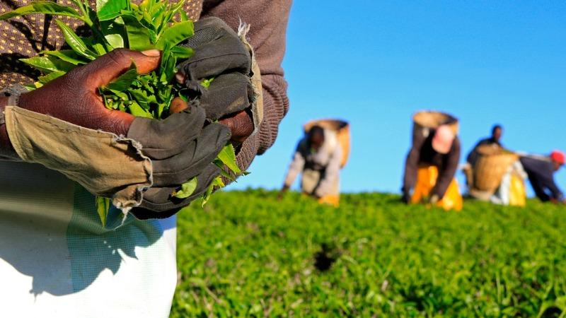 Farewell Fairtrade? Food giants devise own logos