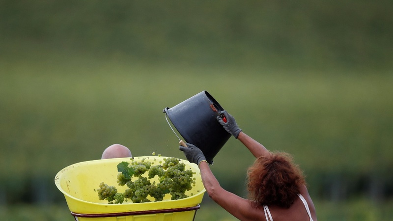 Climate change takes toll on French wine