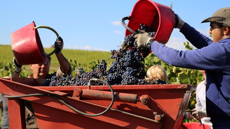 EU rules prune Italian winemakers' ambitions