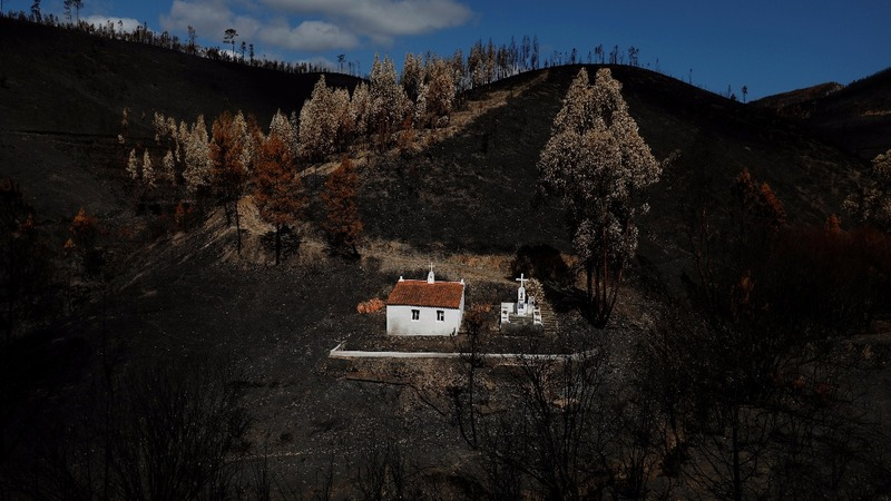 Scorched earth: Portuguese fires prompt reforms