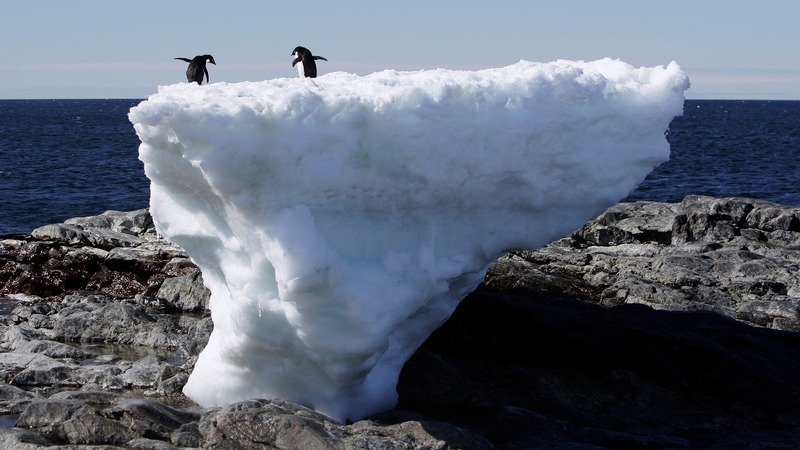 Starvation leads to mass Antarctic penguin die-off