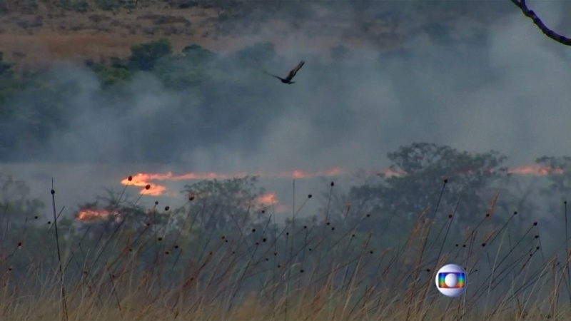 Wildlife at risk in Brazil park blaze