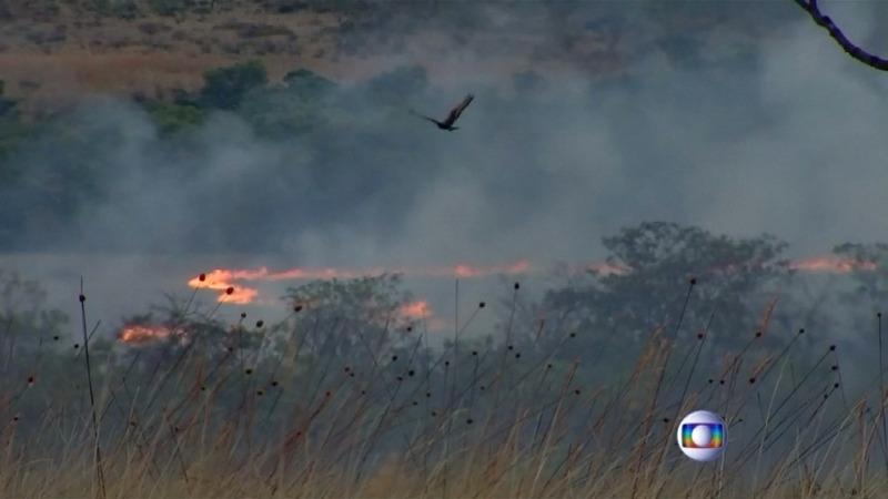 Wildlife at risk in Brazil park blaze