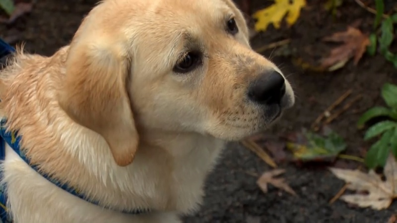 Revived with narcan, dog recovers after ingesting opioids