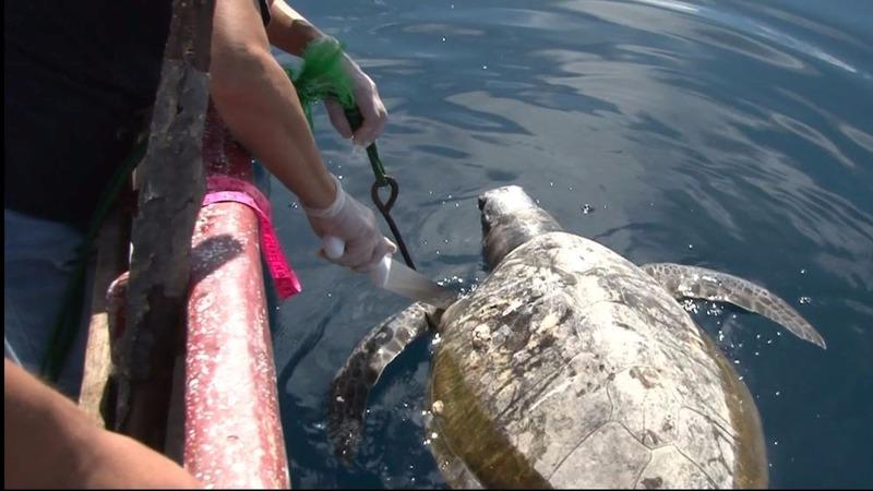 INSIGHT:  El Salvador investigates mass death of turtles