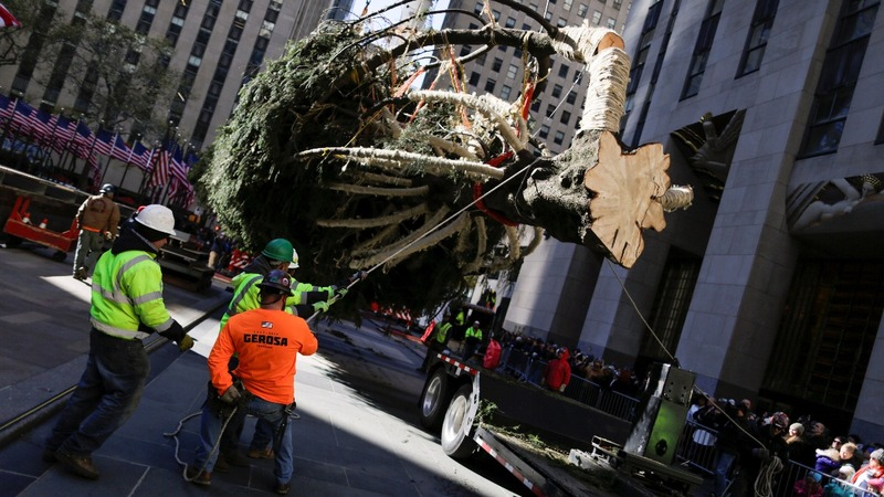 INSIGHT: New York's world-famous Christmas tree arrives