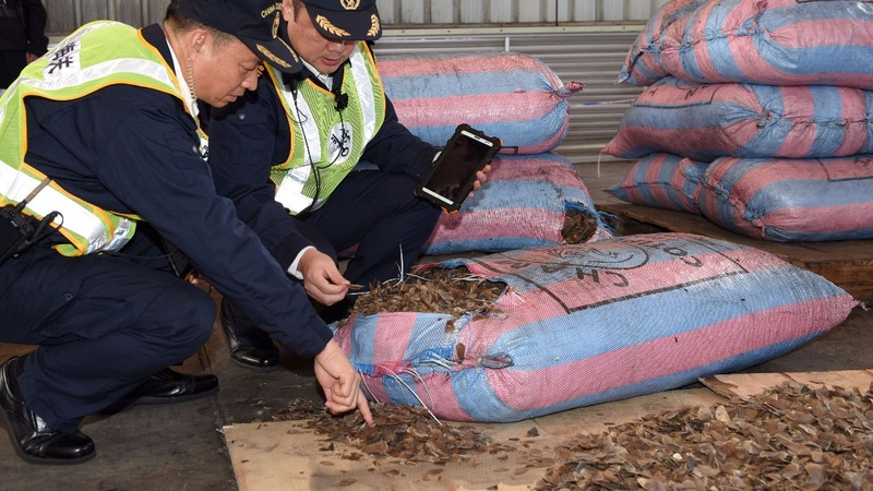 China seizes a record haul of pangolin scales