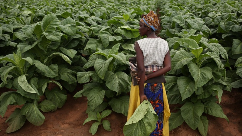 Zimbabwe's white farmers optimistic about post-Mugabe era