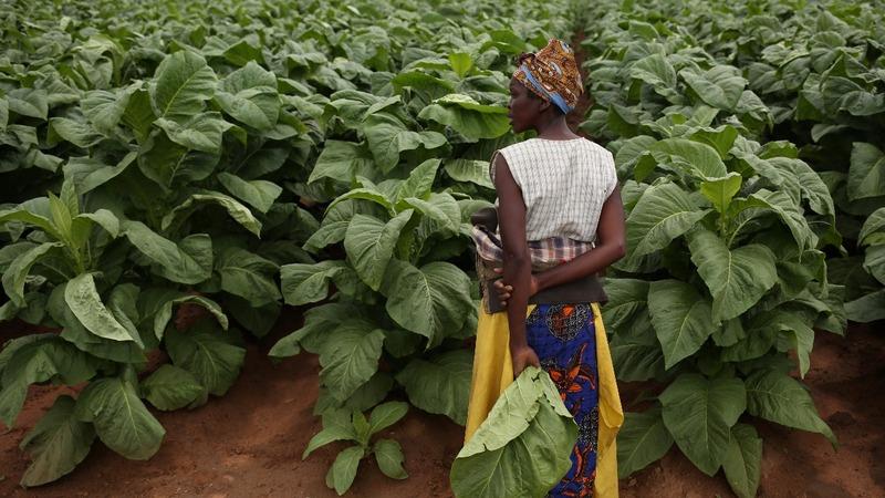 Zimbabwe's white farmers optimistic about post-Mugabe era