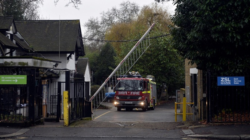 Huge fire breaks out at London zoo