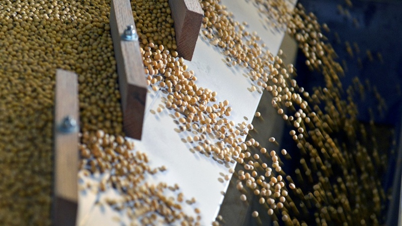 U.S. soy farmers chafe at new China trade deal