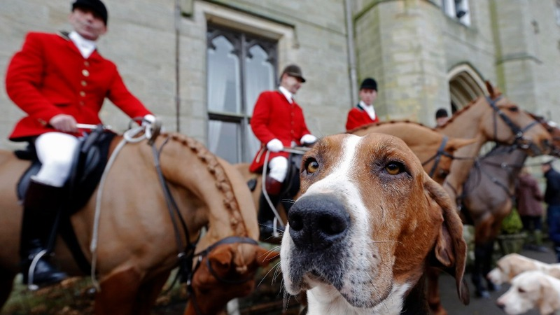 UK's controversial fox hunting will remain banned