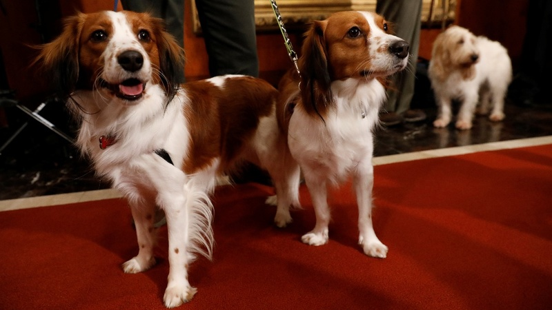 INSIGHT: The American Kennel Club announces new breeds