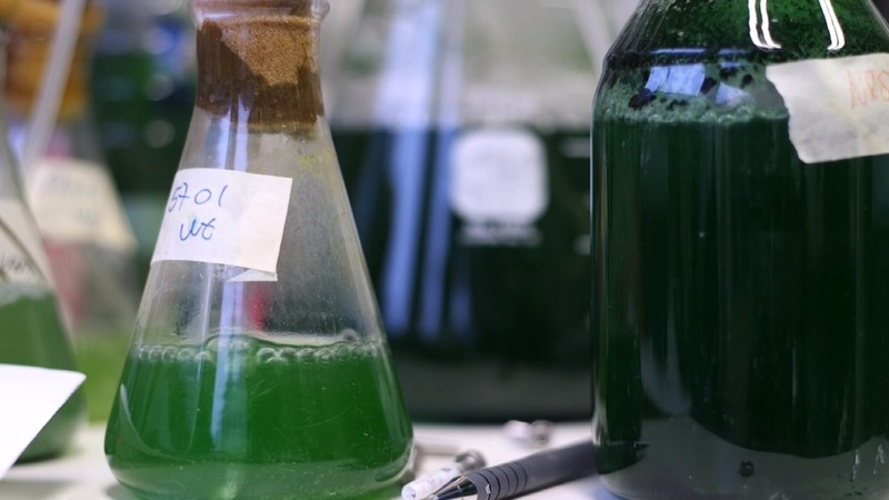 Power plant: getting electricity from algae