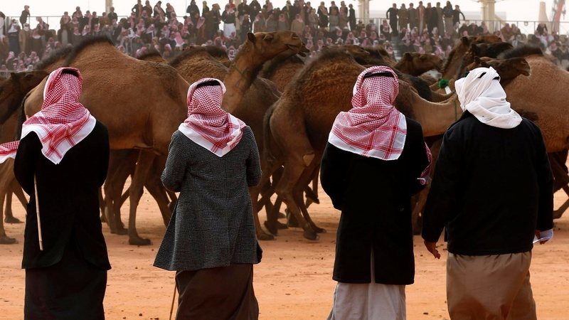 Saudi Arabia's camel beauty pageant keeps tradition alive