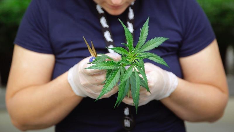 Marijuana merger creates world's largest pot producer
