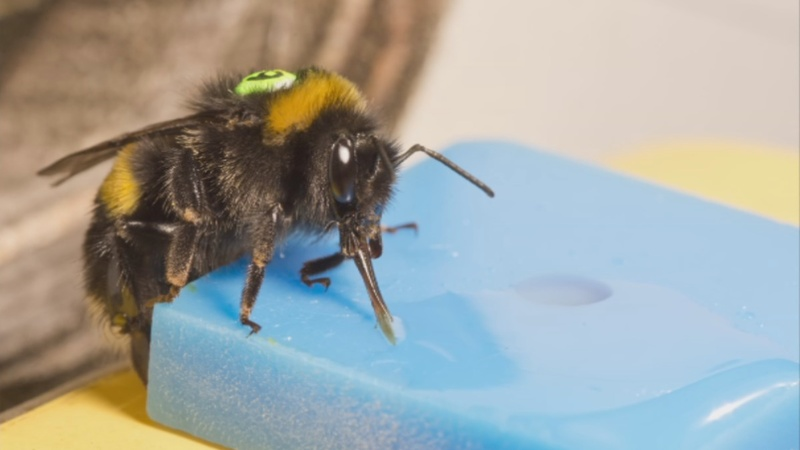 Radar tracking reveals how bees refine their flightpath