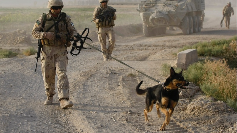 Combat canines mistreated by Army: Pentagon report