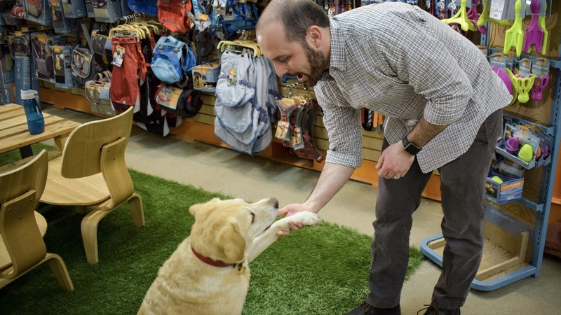 Love for furry friends grows investment interest