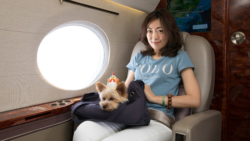 A luxury travel agency for pampered pooches in Hong Kong