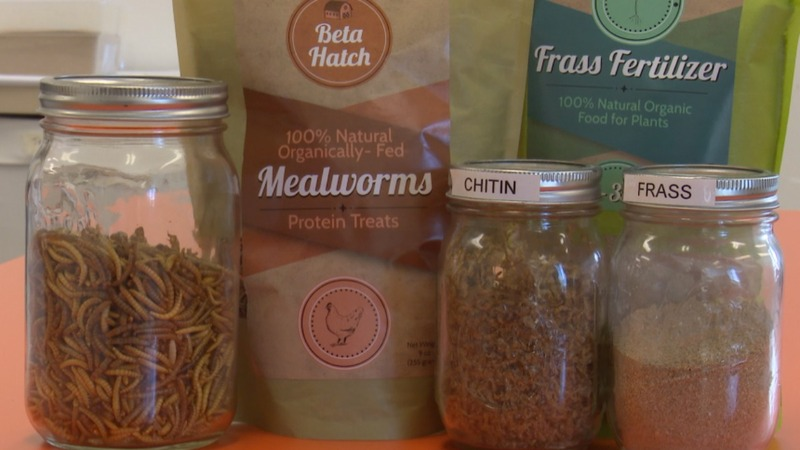 Startups harvest insects for animal feeds