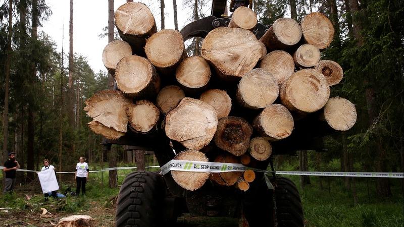 Poland broke EU law logging ancient forest