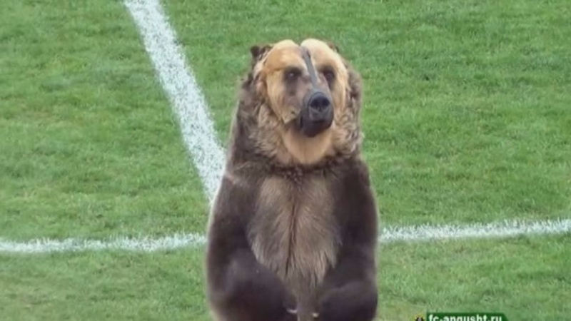 Dancing bear at Russia soccer game sparks anger