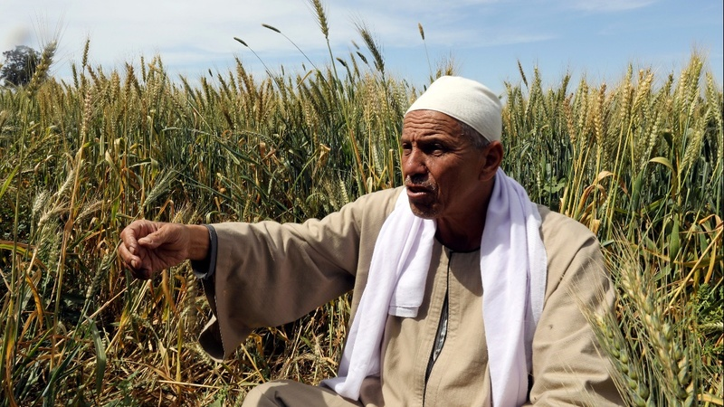 Nile mega-dam rattles downstream Egyptian farmers