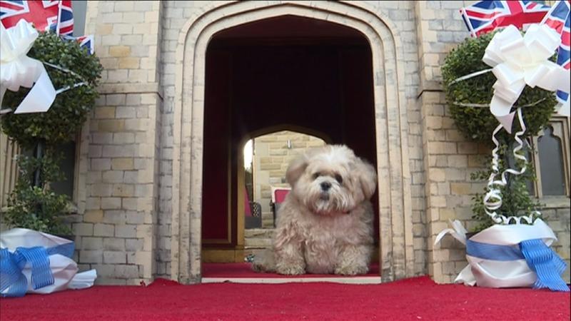 INSIGHT: Spoilt pooch gets royal wedding castle