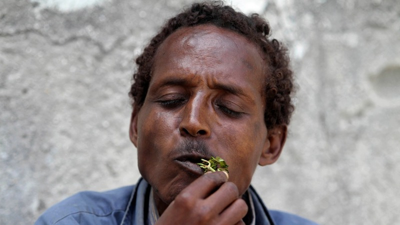 Why Ethiopian farmers are choosing khat over coffee