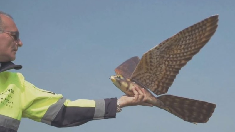 INSIGHT: Robot helps keep birds away from planes