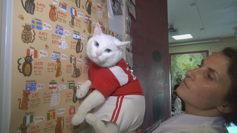 Psychic cat prepares to pick World Cup winner