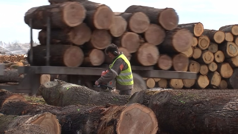 Chinese demand for French oak splits fortunes
