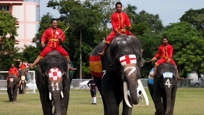 INSIGHT: Soccer elephants beat humans 2-1