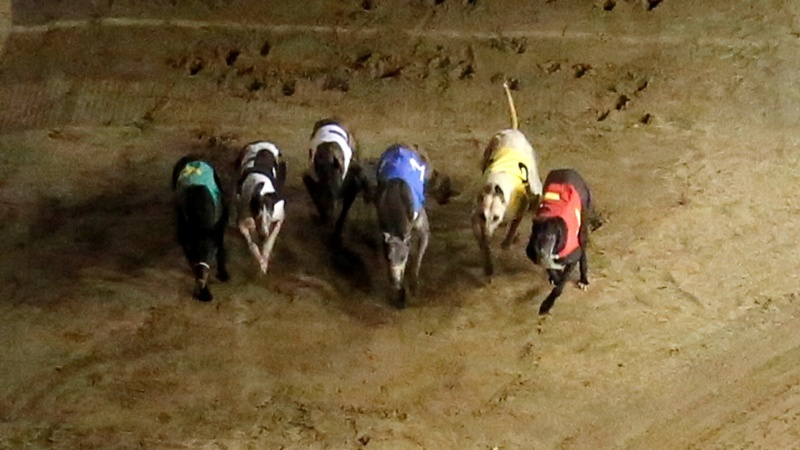 Animal activists rush to save Macau's racing dogs